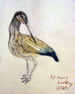 owen-ibis.jpg