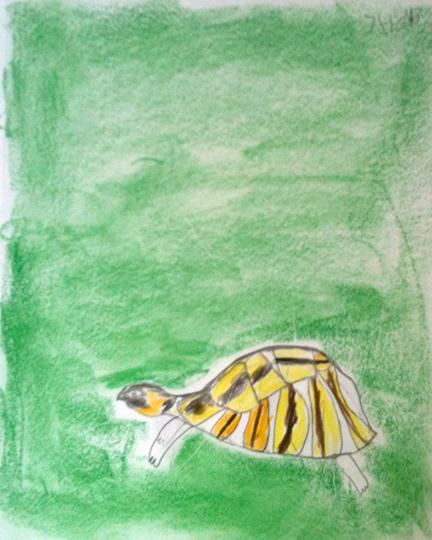 Calebs-turtle.jpg