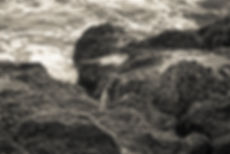NewLandscape-4.jpg