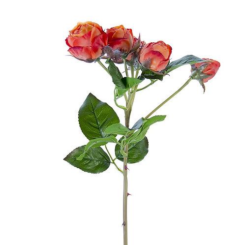 Orange Garden Roses