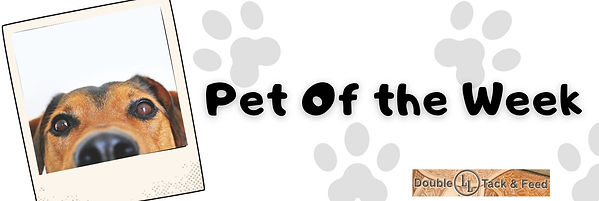 Pet Of the Week.jpg