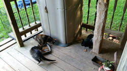 Barn kitties 3