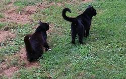 Outdoor cats 2