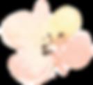 flower_edited_edited.png