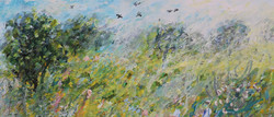 Buttercups cowparsley crows and bees (2)