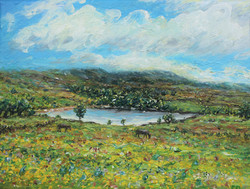 Swinshaw Reservoir with buttercups and h
