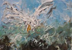 Seagull study 15x20cm (3)