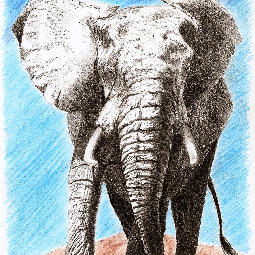 elefante_1080x1080