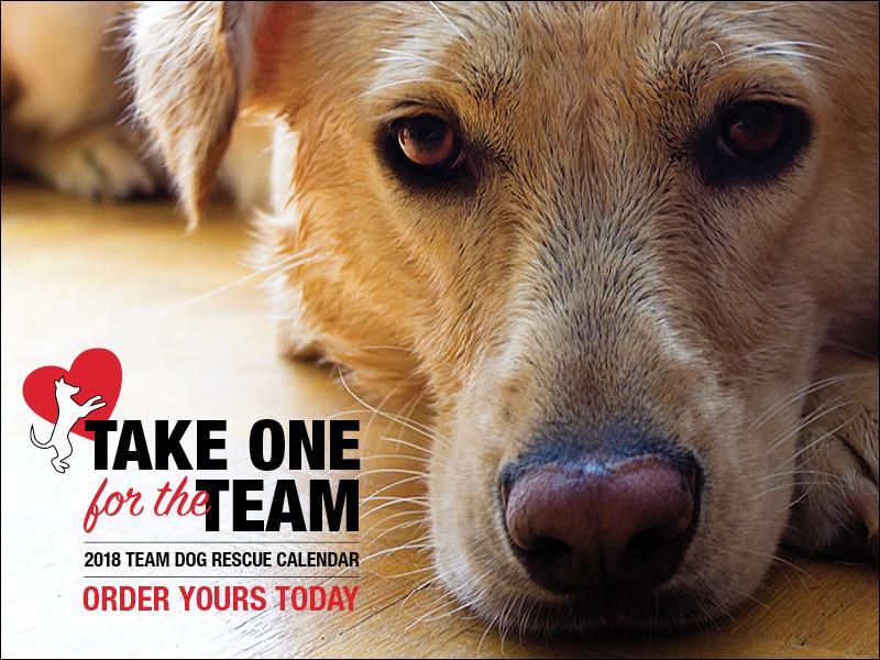 Team Dog 2018 Calendar - BUY ONE!