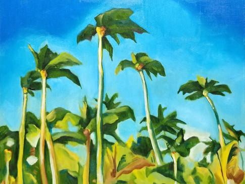 Punta Cana Palm Trees