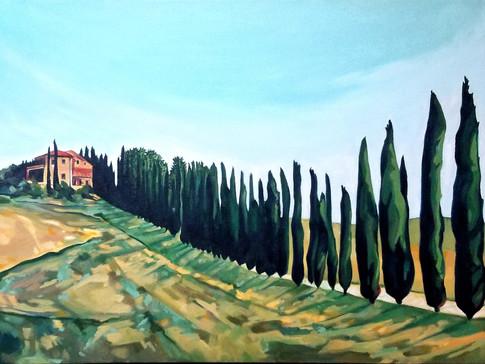 Cypress Trees of Tuscany no 1