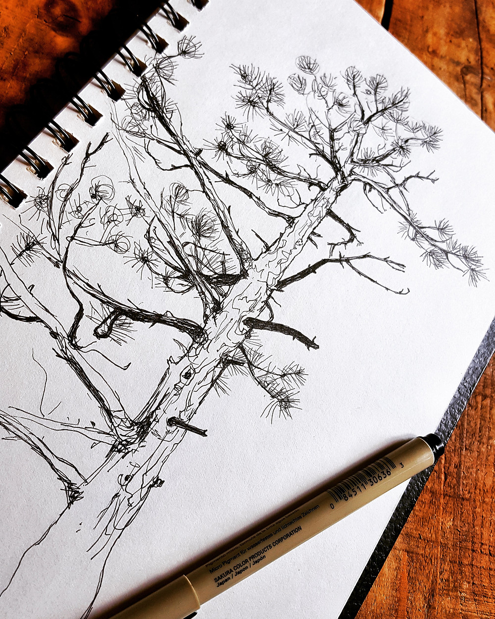 Sketch two, a tree on the campsite.