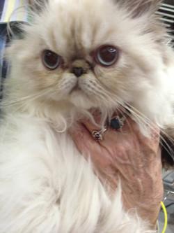 hand holding kitty, 2013