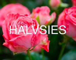 11. Halvsies, 2015