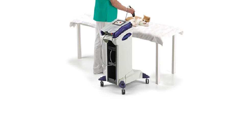 Uso del Láser Clase IV en Rehabilitación Veterinaria