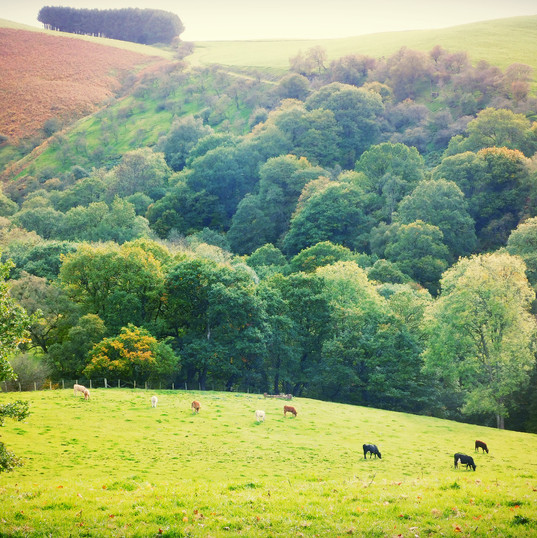 Rural Bliss