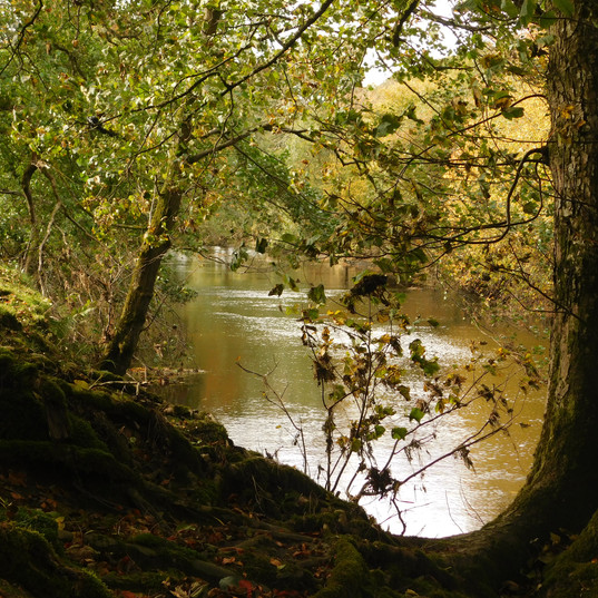 The river Irfon 1