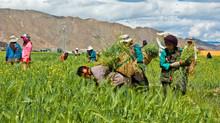Procesos de restitución de tierras en Arauca.