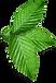 Bouquet de feuilles