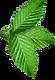葉のクラスタ