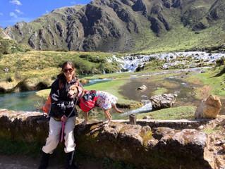 5 lugares imperdibles para un viaje de aventura con tu mascota