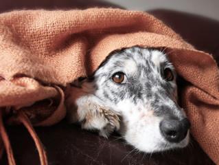 ¿Sabías que los perros también sienten frío?