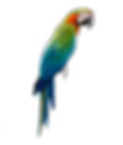 perroquet-ara-30.png