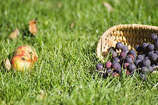 grapes-2696869_1920.jpg