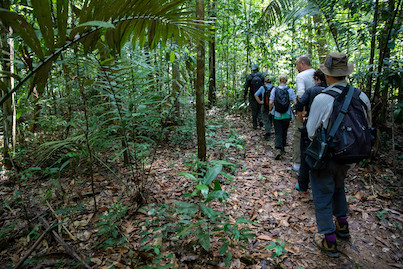 People hiking through the rainforest