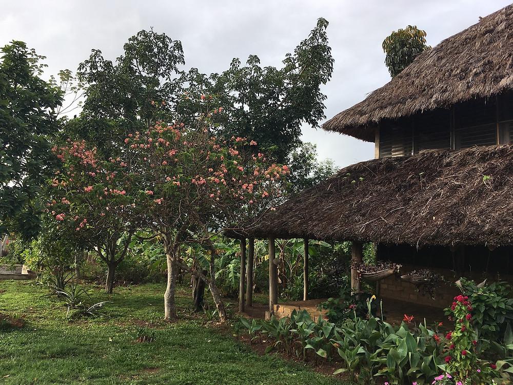 Caiman House