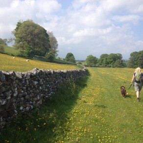 Wildflowers and wildlife on the Bowland Rambler Service