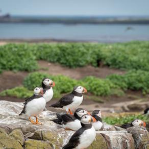 Wildlife watching on the Farne Islands, Northumberland Coast