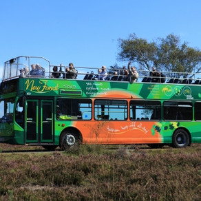 Car-free Guide to the New Forest National Park
