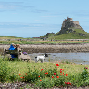 A green holiday on the Northumberland Coast