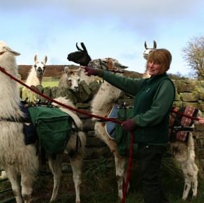 Walking with llamas in Nidderdale