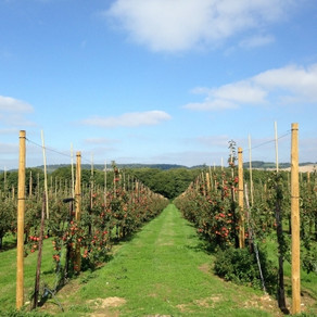 Local flavours of the Kent Downs