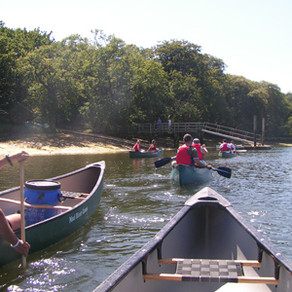 Canoeing in the New Forest
