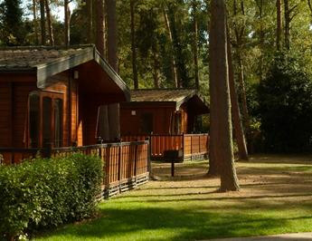 Wooden lodges at Sandy Balls in the New Forest