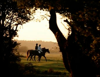 Horse-riding in the New Forest