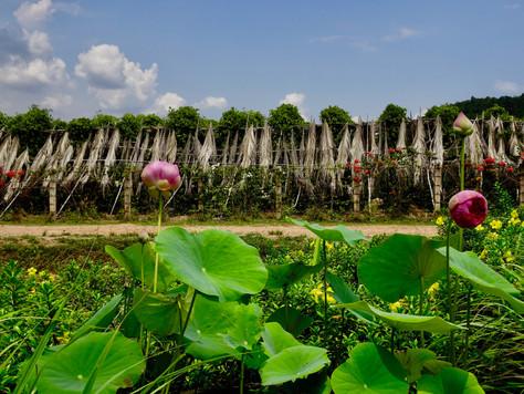 Kampot de poivre!