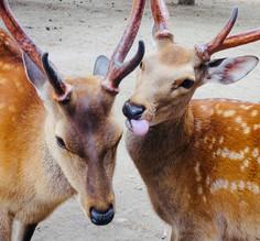 Nara - Les Dents de la Terre