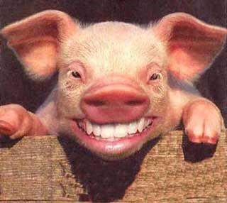 """Vereadores de oposição """"baixam espírito de porco"""" e votam contra projeto de limpeza da cidade"""