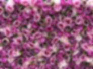 PurplePrincess_edited.jpg