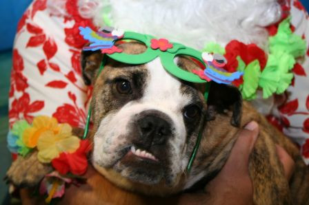 PetPALS_Photos_Christmas_in_July2.jpg