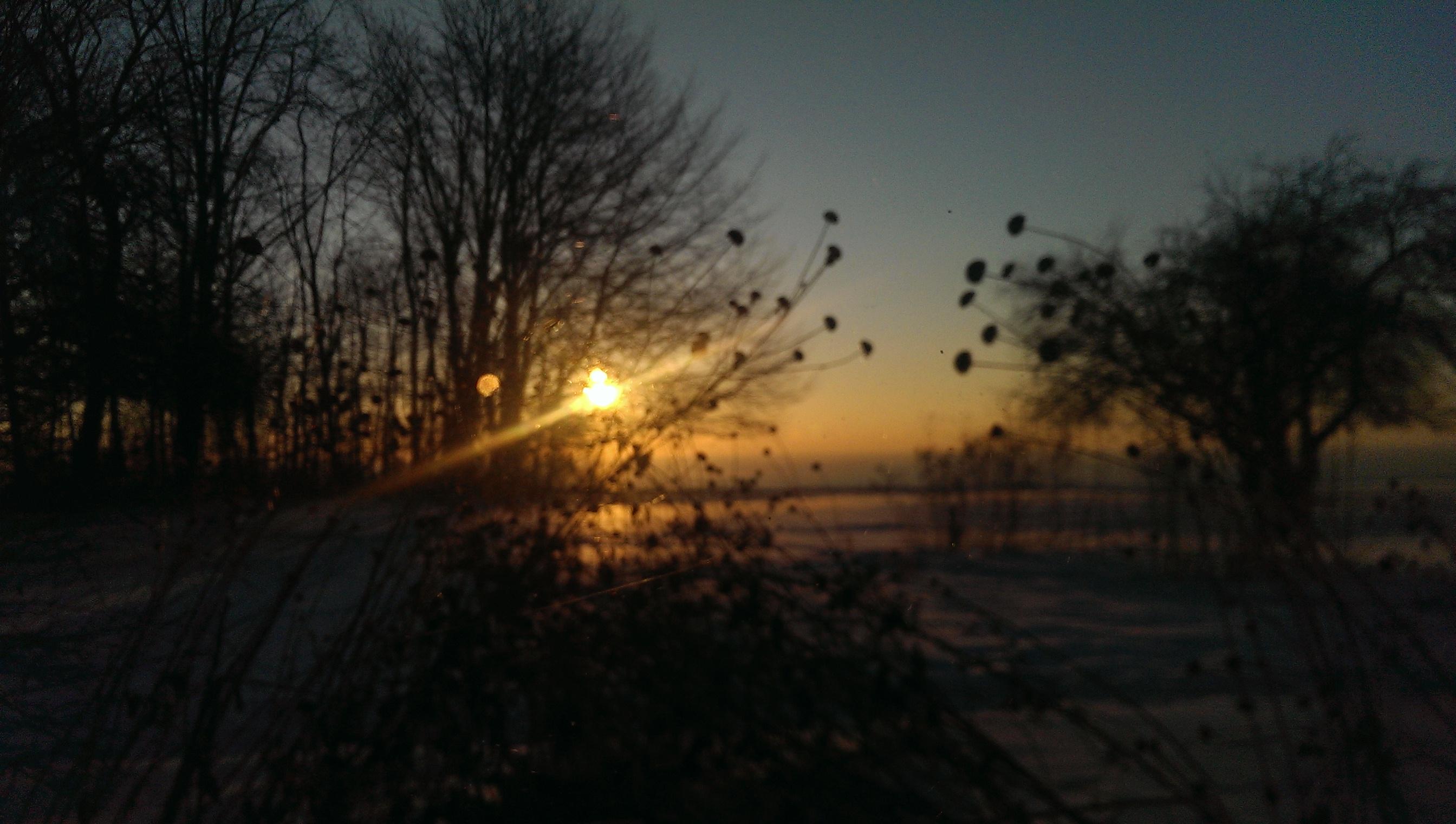 SunriseBlossom2.jpg