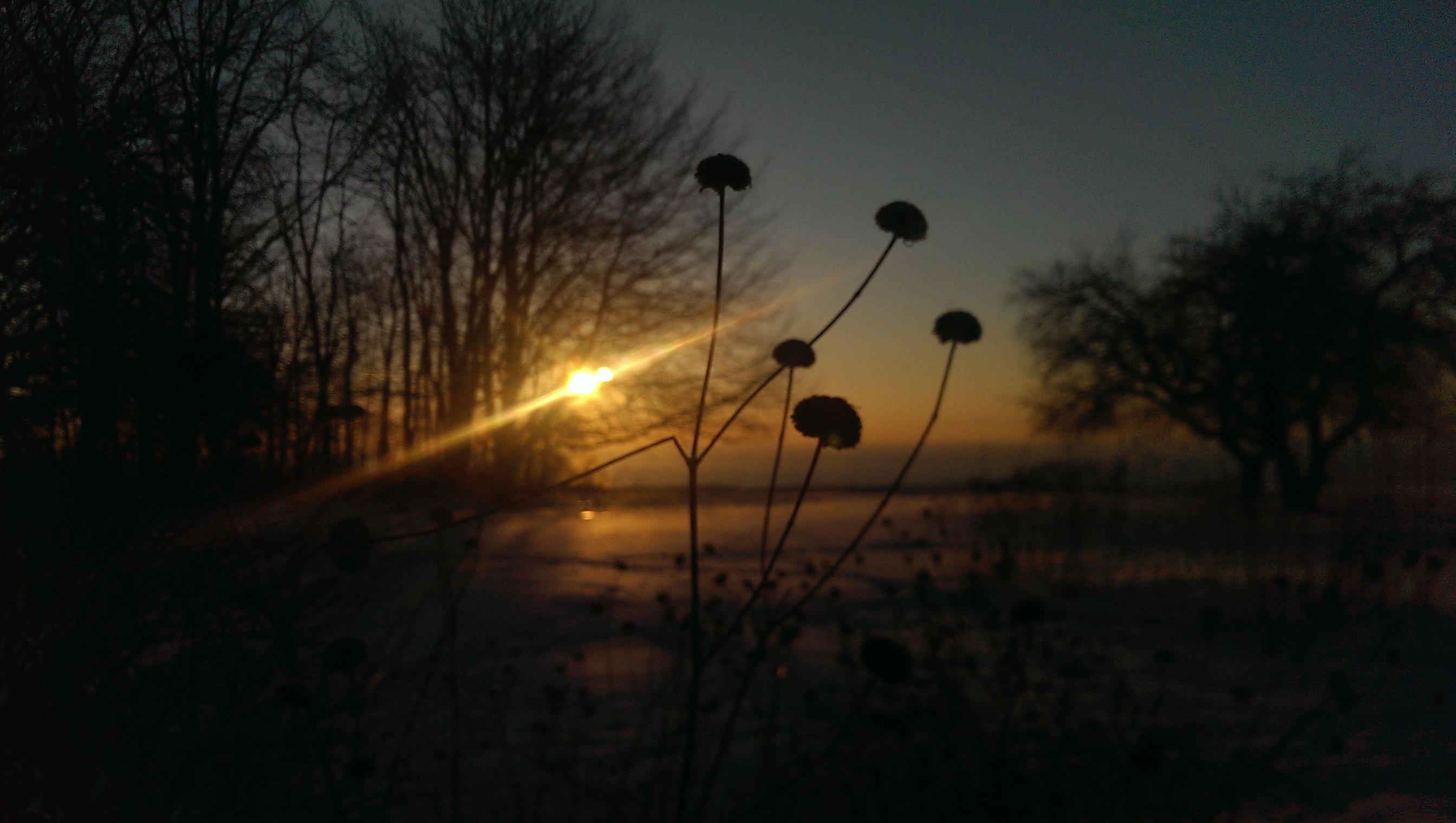 SunriseBlossom.jpg