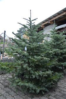 Baum 1 1..JPG
