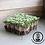 Thumbnail: Microgreens - Spicy Salad Mix