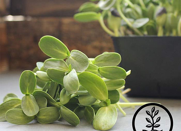Microgreens - Sunflower
