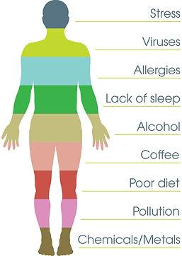 body-stresses-image.jpg